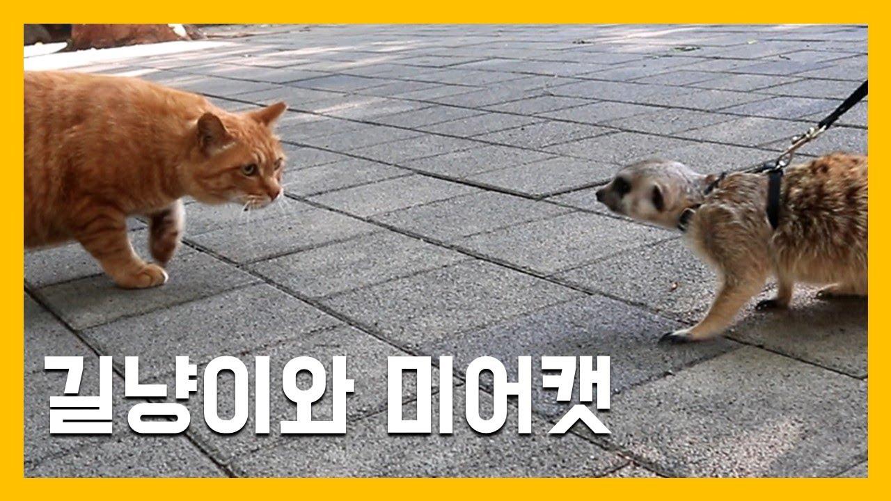 길냥이와 미어캣 [냥이아빠]