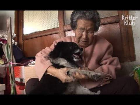 Dog Hops On Three Legs Just To Be With Grandma (Part 1) | Kritter Klub