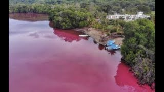 "Breaking ""Blood Red Water In Mexico Apocalyptic Sign"""
