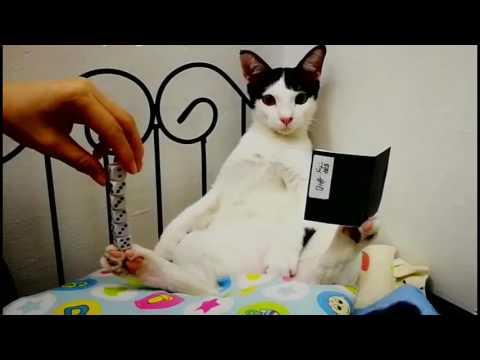 Amazing Cat Trick