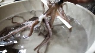 eating live octopus in korea san nakji 산낙지