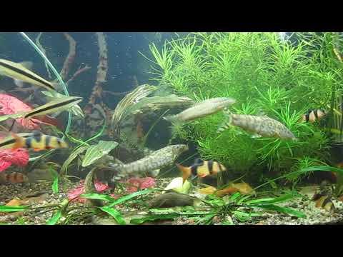 1 год аквариуму с боциями