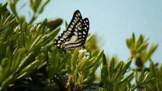 鈴木蘭々 - キミとボク
