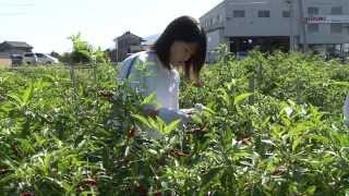 徳島県立美馬商業高等学校(現・徳島県立つるぎ高等学校)