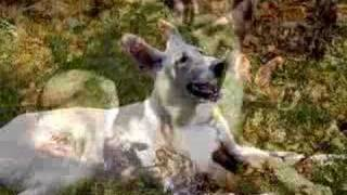Arf's German Shepherd Rescue, Inc. 5 Years