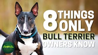 8 Things Only Bull Terrier Dog Owners Understand