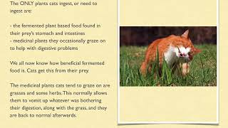 Dry Cat Food - How Bad Is It Really?