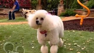 Собака точка ком   1 сезон, 4 4 серия