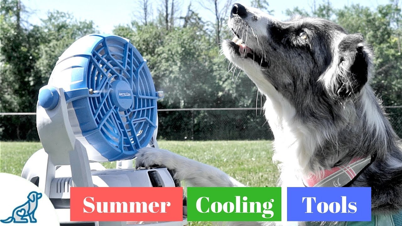 How To Keep Your Dog Cool In The Heat- Summer Cooling Gadgets - Professional Dog Training Tips
