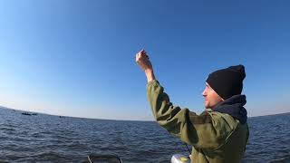 Осенний жор судака на водохранилище рыбалка на судака 2021 удалась на славу