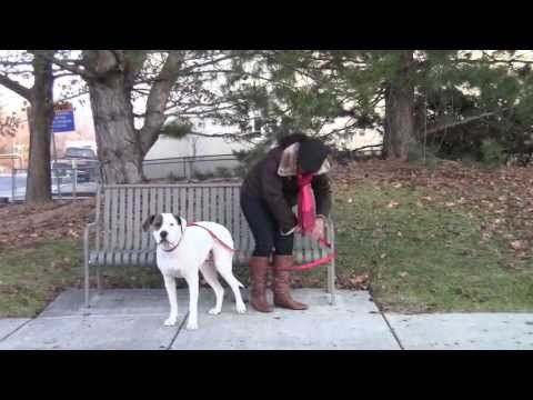 how to train a dog to not need a leash