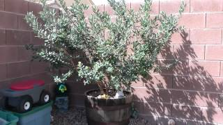 Vegetable Garden March 27 2012