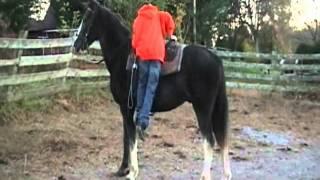 Blue Boy 2 Horsetopia.wmv