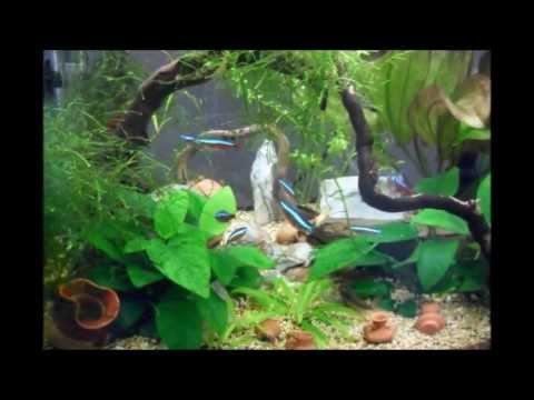 nano acquario 34l l 39 evoluzione un piccolo angolo di