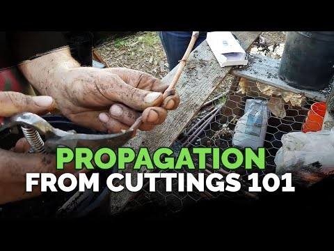 Propagating From Cuttings 101