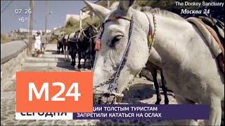Смотреть видео Власти Греции запретили толстым туристам кататься на ослах - Москва 24 онлайн