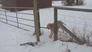 Как обмануть собаку // How to fool a dog