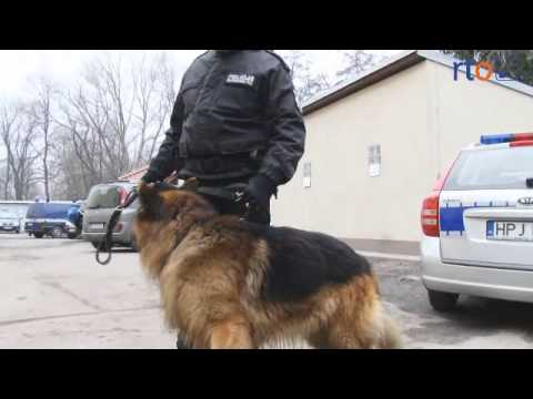 Ogromny Pies policyjny Bej w akcji - YouTube XY46