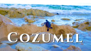 So Many Things to do in Cozumel Mexico! | Mayan Bees and Baby Turtles