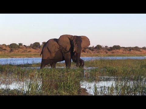 Leroo La Tau Lodge - Botswana HD