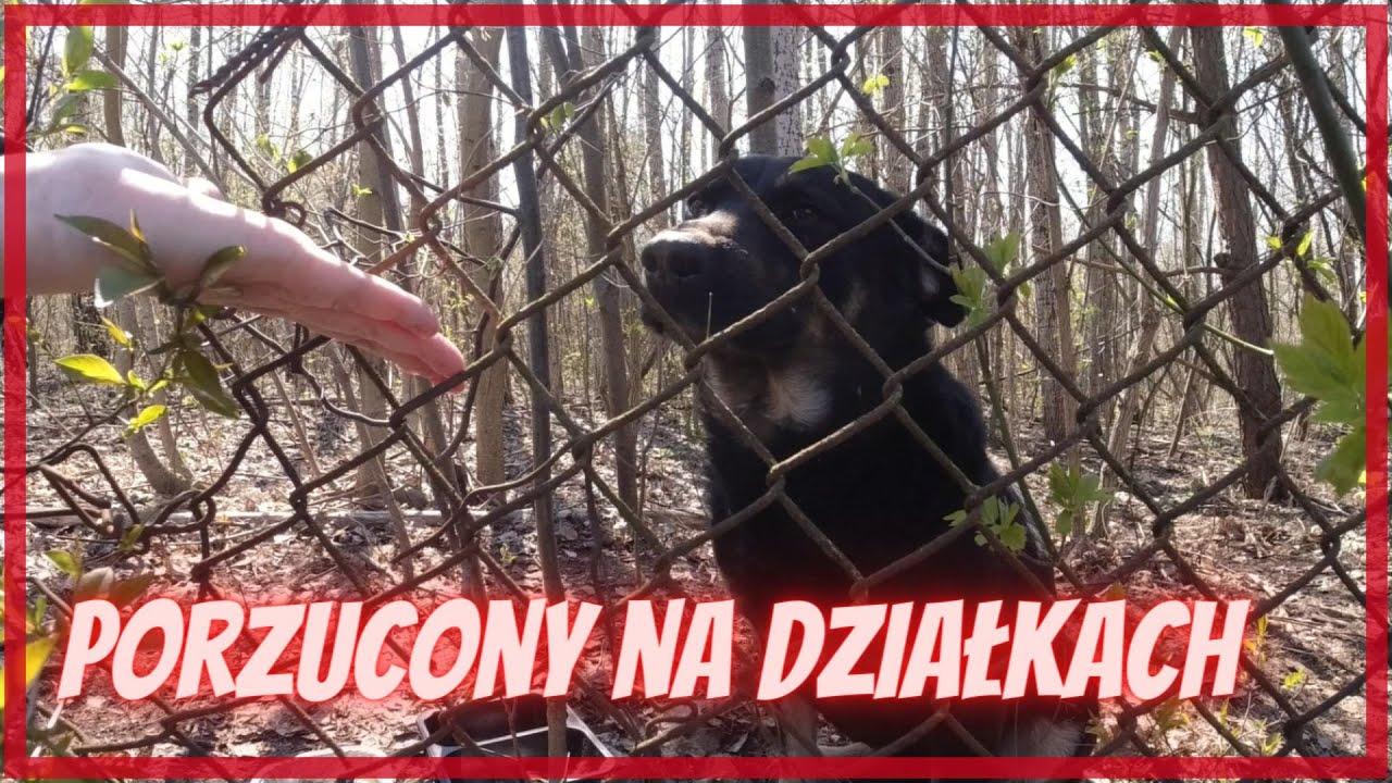 Pies porzucony na działkach!