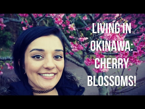 Cherry Blossoms | Living in Okinawa