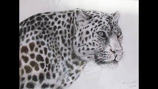 Рисунки животных..