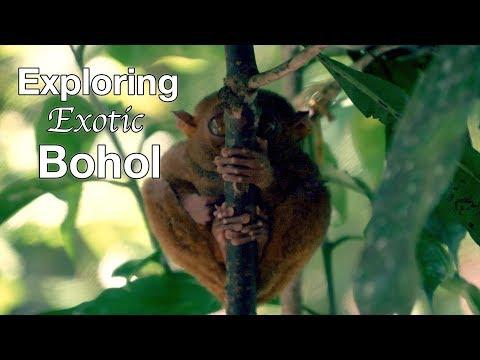 Exploring Bohol | Tarsier and Bridges