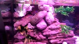 How to create a waterfall fountain in a molded aquarium -try it yourself