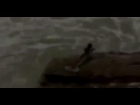 【衝撃映像】人魚Mermaid 世界各地で撮られた映像