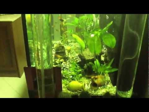 Acquario acqua dolce 200 litri youtube for Arredo acquario acqua dolce