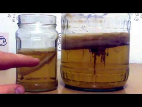Чайный гриб. Полезные свойства. Чайный гриб для похудения