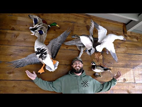 Waterfowl Taxidermy Collection!