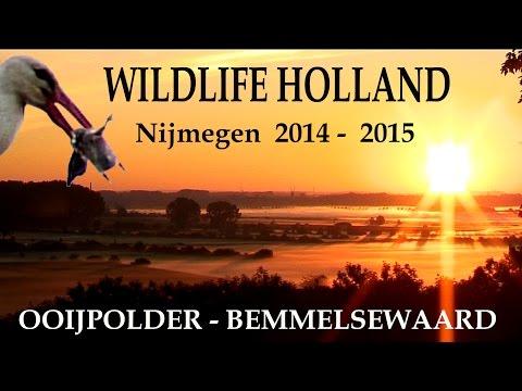 WILDLIFE HOLLAND 1 - Ooijpolder \u0026 Bemmelse Waard 2014 - 2015 - JEROWORLD