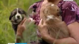В Красноярске ищут нового подрядчика по отлову бродячих собак