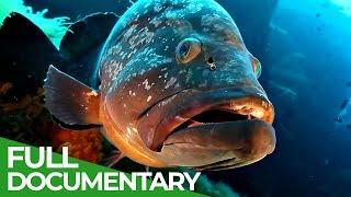 The wonderful Wildlife of Sardinia | Free Documentary Nature