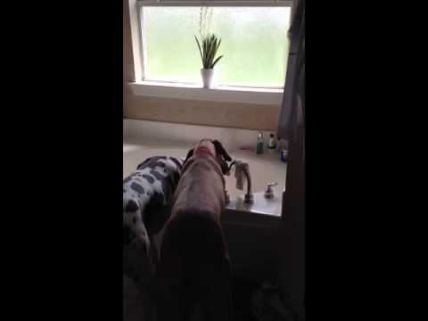 Dog turns on water faucet
