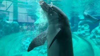 世界最大の水族館(1の2)/The Largest Aquarium in the World (1 of 2)