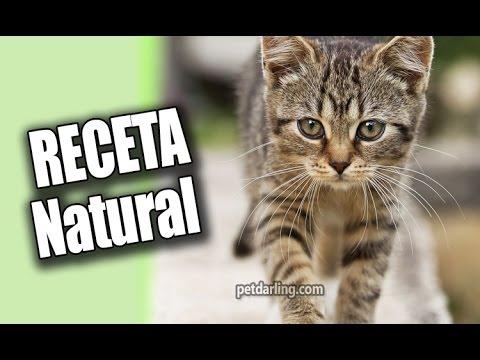 RECETA para GATOS y PERROS de PESCADO. ✪ DIY comida casera para gatos y perros!!