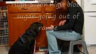 Diabetes Alert Service Dog Training