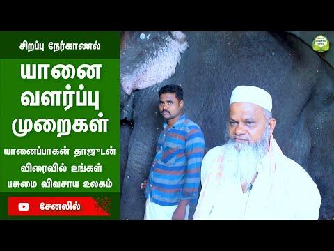 யானை வளர்ப்பு Promo | Indian Temple Elephant