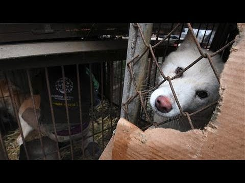 South Korea's Dog Meat Tradition Defies Growing Pressure
