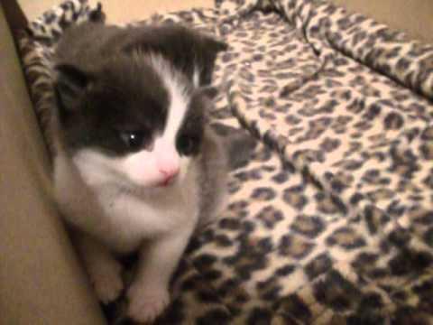 Cat hitting her kittens xD
