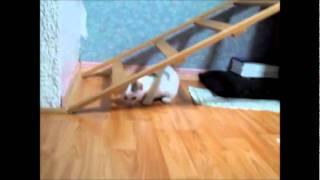 Video bebe kittens QBX