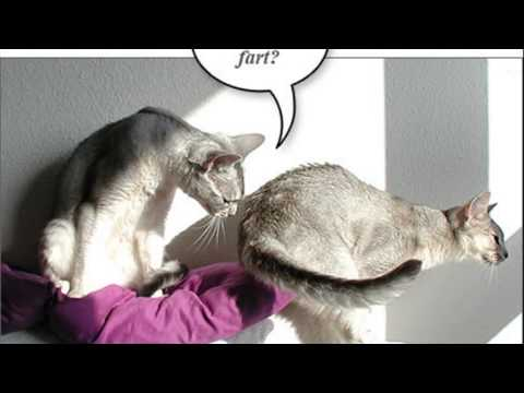Youtube Dogs And Cats Farting