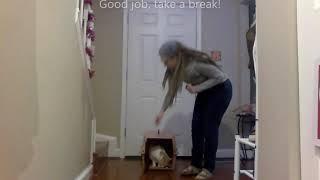 Cat Carrier Training Progression Part 2