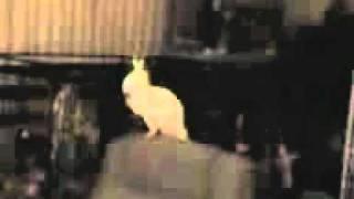 танцующий попугай(видео, добавленное с мобильного телефона., 2011-08-17T09:40:21.000Z)
