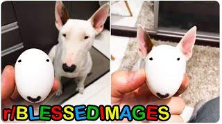 r/Blessedimages · egg walter