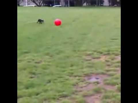 Funny Dog Vine