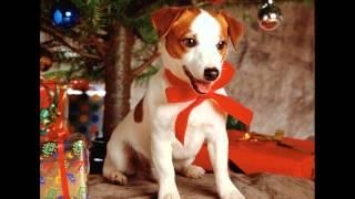 прикольные подарки на новый год купить минск(, 2014-11-30T07:04:28.000Z)
